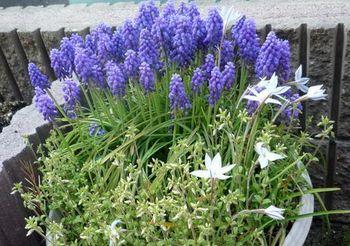 152 紫の花 (2).jpg