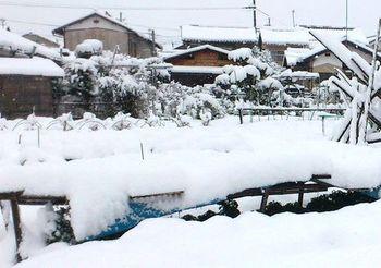 2365 雪201402-4.jpg