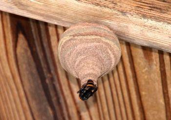 3616 蜂の巣201505-3.jpg