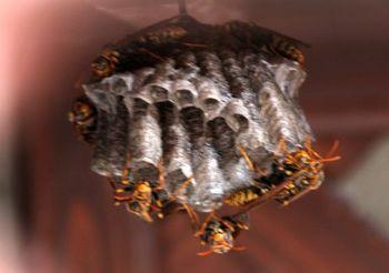 3825 蜂の巣201507-2.jpg