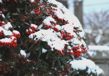4449 雪201601-2.jpg
