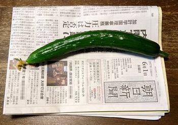 6027-1 キュウリ実201706-1.jpg