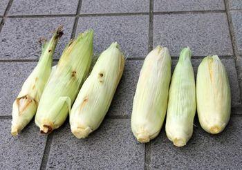 6203-2 トウモロコシ201708-2.jpg