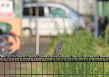 6235 鳥201708-1.jpg