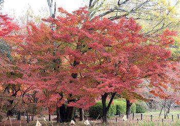 6604-5 植物園2017-12.JPG
