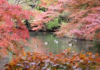 6616 植物園2017-19.JPG