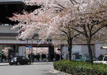 7035 桜201804-05.JPG