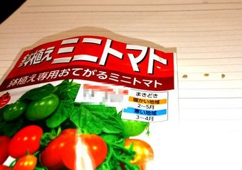 7099 トマト種201804.JPG