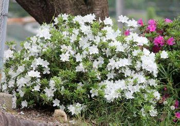7151-2 動植物201805-01.JPG