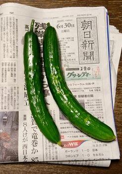 7301-3 キュウリ20180630.JPG